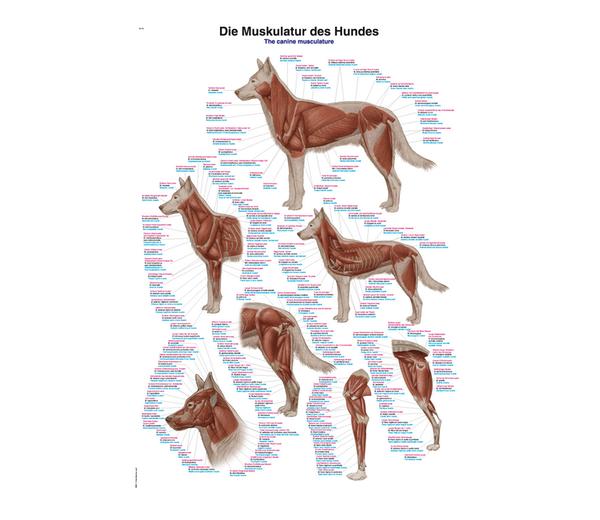 Animal Anatomical Charts