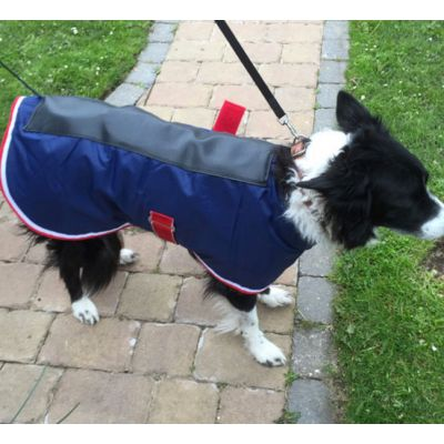 Canine Spinal Jacket - made to measure
