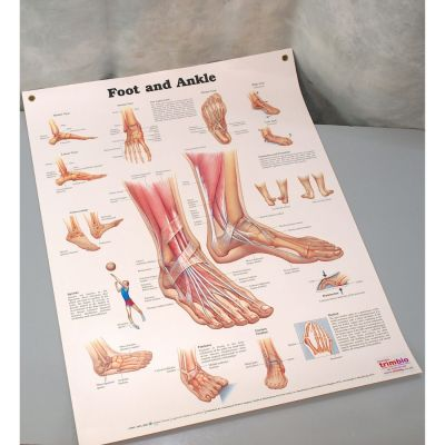 Used - Foot & Ankle Chart Laminated 50cm x 65cm with eyelets
