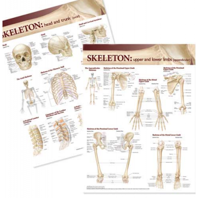 Lippincott Williams & Wilkins Atlas of Anatomy Skeletal System Chart Set