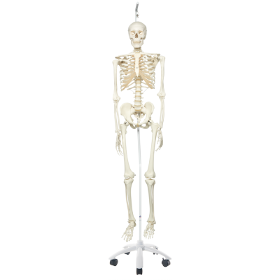 Skeleton Model - Stan