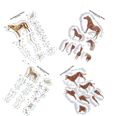 Set of 4 Canine & Equine Charts Large 70 x 100cm